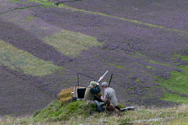 Bransdale Estate Grouse Shooting