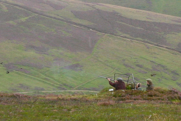 Glenogil Estate Grouse Shooting