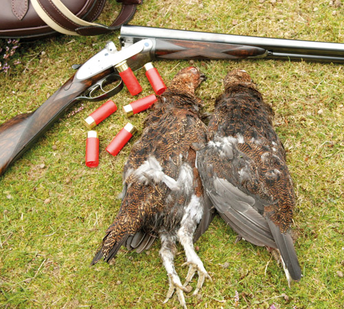 Cartridges for Grouse Shooting