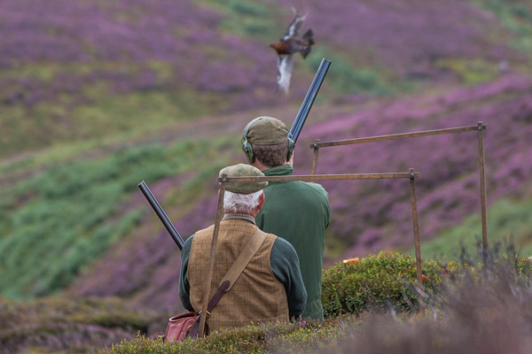 Driven Grouse Shooting Prospects 2018 - William Powell Sporting