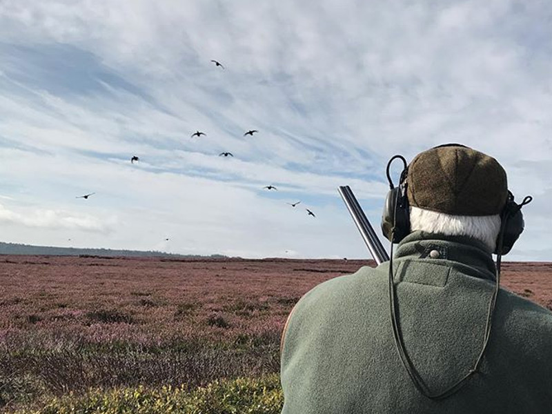Has the 2017 Grouse Season been as good as expected