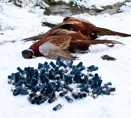 Cartridges for Pheasant Shooting