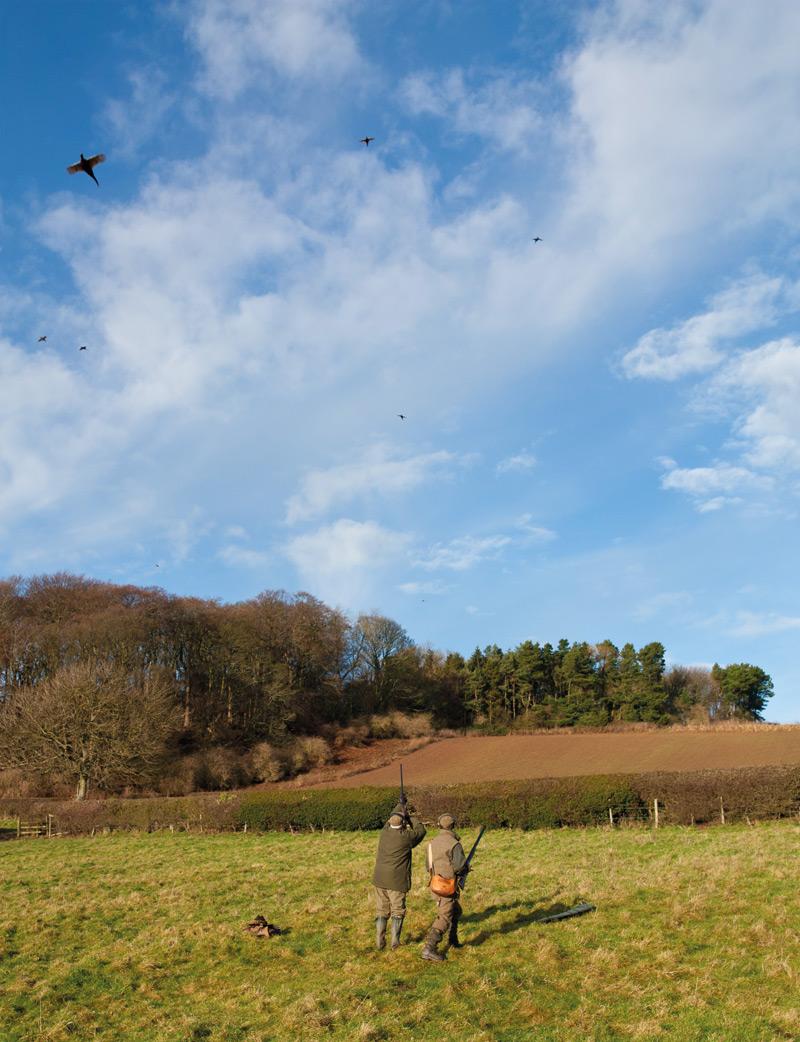 Driven Pheasant Shooting