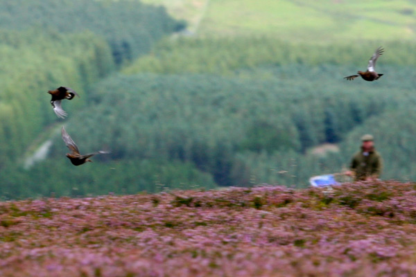 Snilesworth Estate Grouse Shooting