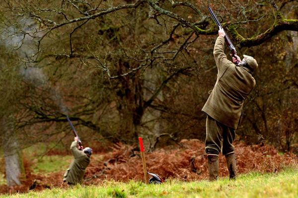 Springhead Driven Partridges