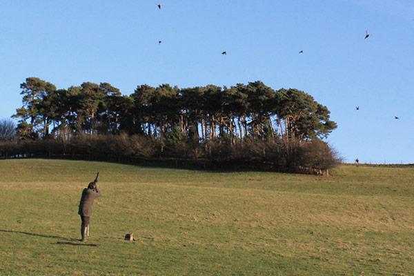Belvoir Castle - Driven Pheasant & Partridge Shooting