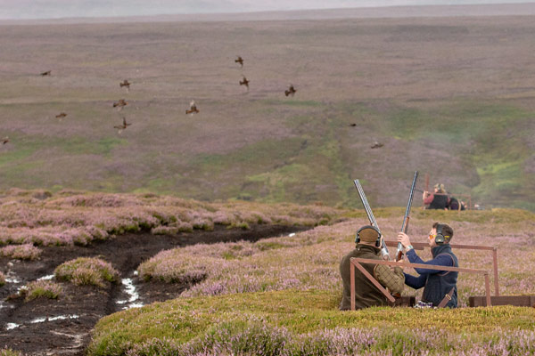 Bransdale - Driven Grouse Shooting