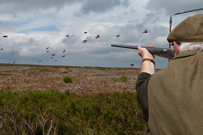 Crag - Driven Grouse Shooting