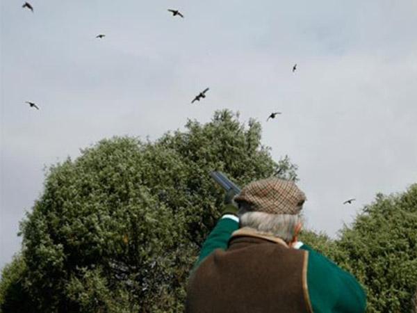 Fuensauco - Spanish Partridge Shooting