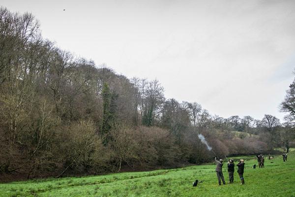 Haddeo Estate - Driven Pheasant & Partridge Shooting