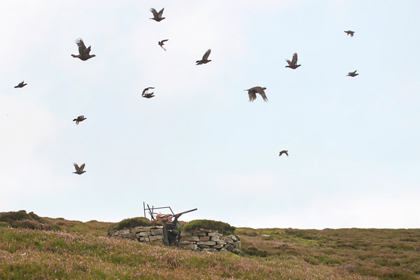 Knarsdale - Driven Grouse Shooting
