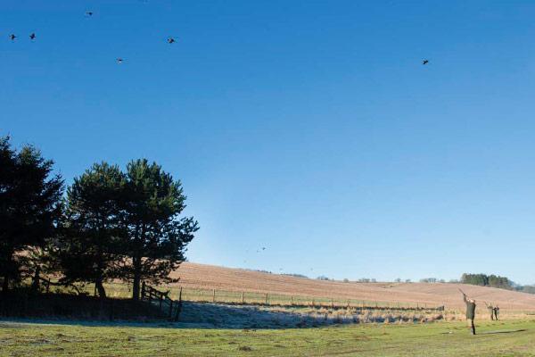 Salperton Park - Driven Pheasant & Partridge Shooting