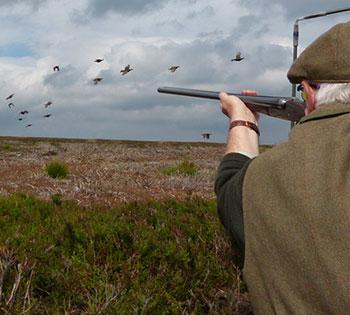 Small Calibre  Grouse Shooting