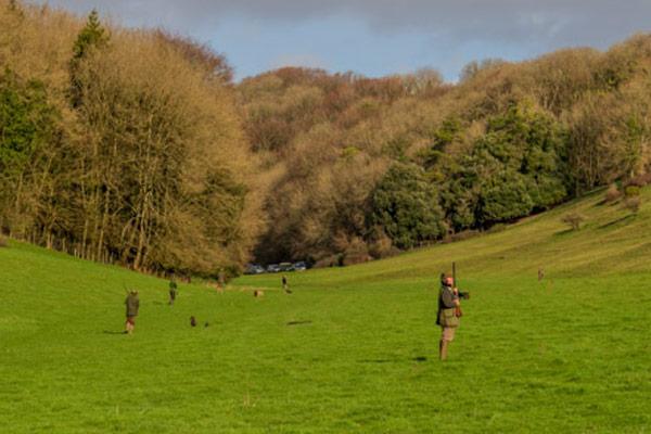 Wrackleford Estate - Driven Pheasant & Partridge Shooting