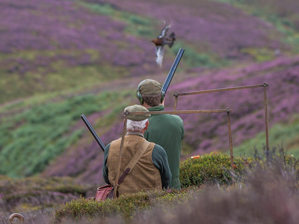 Driven Grouse Shooting