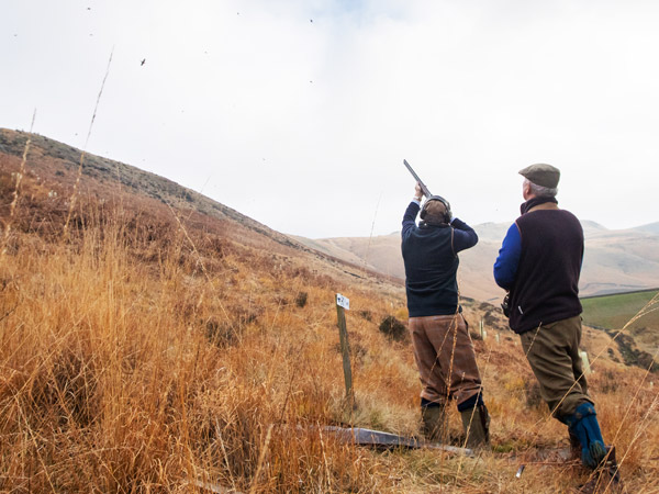 Driven Partridge Shooting