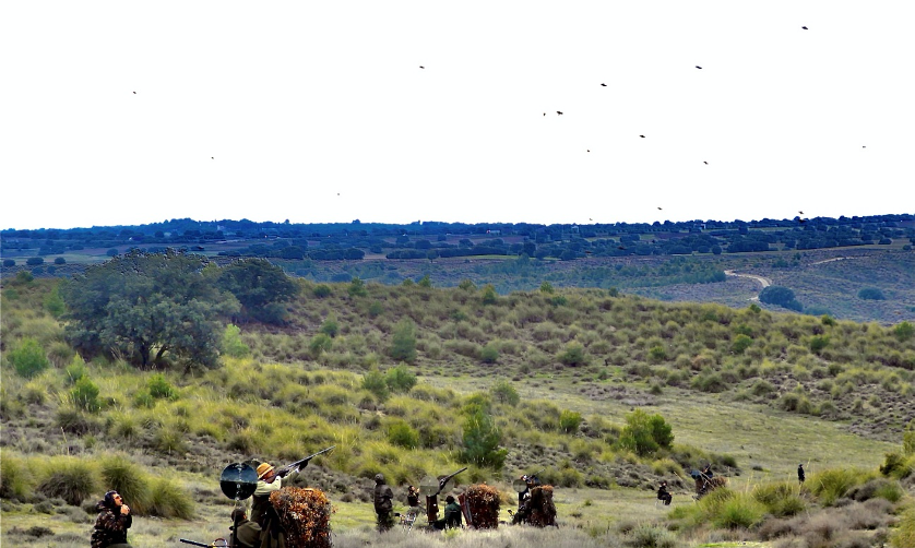 Driven Partridge Shooting in Spain